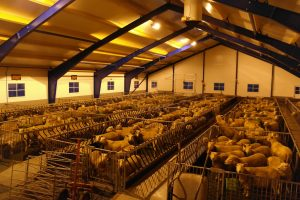 Stal Vikholmen LED stalverlichting koeien varkens paarden schapen LED barn lighting cows horses pigs sows sheep LED Stallbeleuchtung Rindvieh Pferde Ziegen Schaf LED d'éclairage bovin Équin Caprin Porcins Mastvieh
