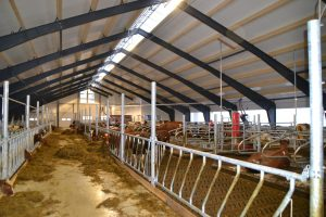 LED stalverlichting koeien varkens paarden schapen LED barn lighting cows horses pigs sows sheep LED Stallbeleuchtung Rindvieh Pferde Ziegen Schaf LED d'éclairage bovin Équin Caprin Porcins Mastvieh