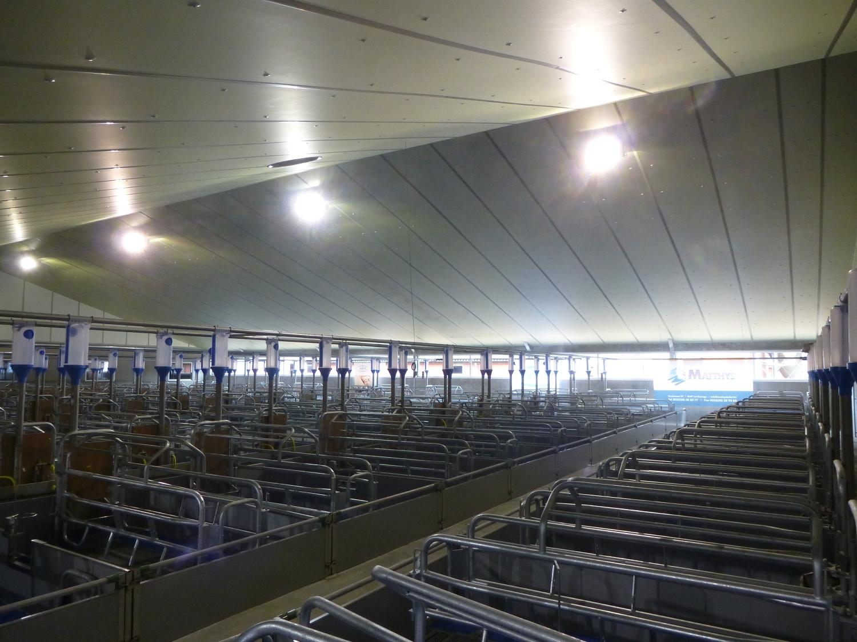 Stal Gierle Stallbeleuchtung Mastvieh Stalverlichting varkens d'éclairage Porcins barn lighting pigs sows